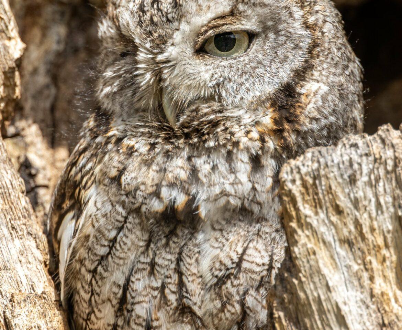 Owls Owls Owls