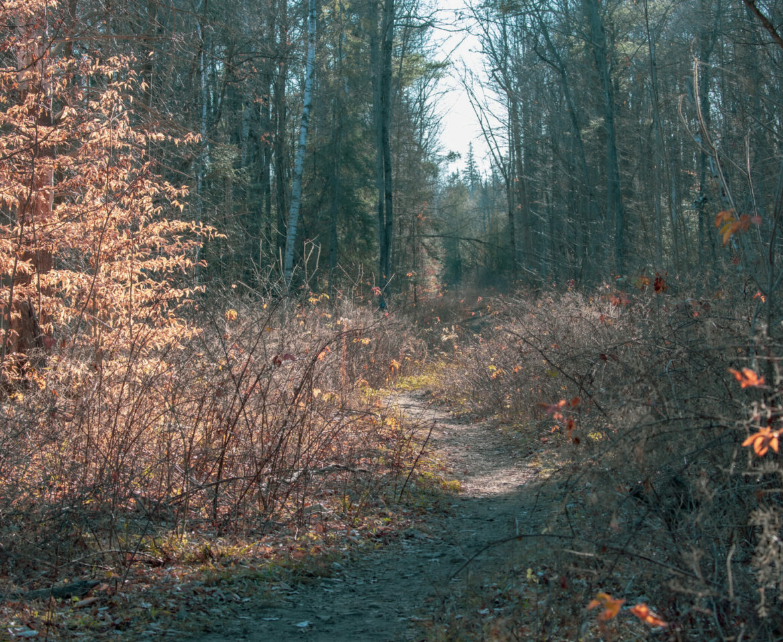 Lime Kiln and Beaver Pond Trail